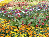 Multi-colored flowers.
