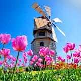 ~Holland Spring~