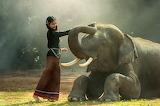 Elefante bueno