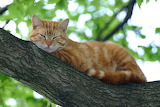 Cats Branches Ginger color 541468 1280x853