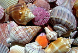 ☺♥ Gifts from the sea...