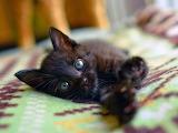 Black kitten stretching