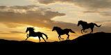 Wild Horses (15)