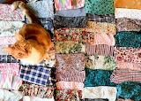 'Crafty' cat ;)
