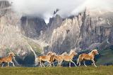 Horses running free-Deb Kalas Photographer