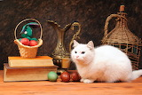 White Cat with Eggs