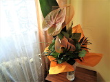 Anthurium - flower
