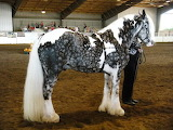 Unique horse color