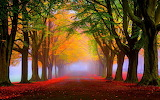 ^ Autumn Landscape Park Trees Red And Yellow Leaves