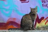 Urban Cat