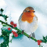 Christmas Robin @ Pinterest...