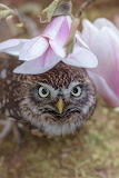 Birds tumblr mohnblumesworld Owl