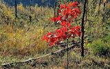 Jesień w Kampinosie -foto - K.S.-Altro