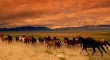 Wild Horses (16)