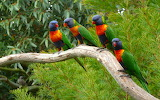 476564-animals-nature-parrot-birds
