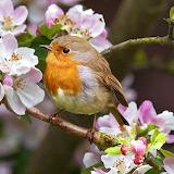 *Small Bird On Blossom Tree...