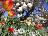 @ Spring