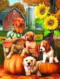Autumn Puppies