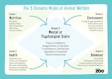 The 5 Domains of Animal Welfare