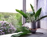 Ventana rodeada de flores
