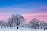 Polska zima
