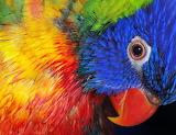 Beautiful Birds @ freeimages.com...