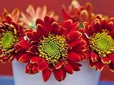#Summer Bouquet
