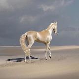 Cavall - Horse