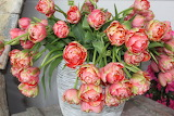 Tulips, flowers, bouquet, pink color