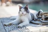 Katze am Hafen