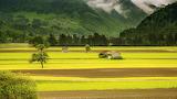 Countryside-field-landscape-66874