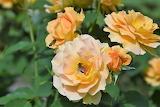 De mi jardin 755
