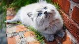 Cats Glance Kittens 562282 1280x720