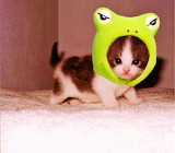 I'm a Kitty Frog!