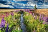 New zealand-landscape-by Robert Harding