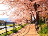 A path I'd like to walk