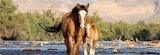 Wild Horses (2)