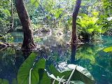 Laos, mangrove