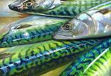Mackerel by Paul Martin