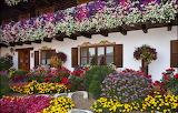 Germany Houses Roses