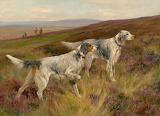 English setters grouse