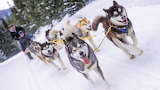 Dog sled  beautiful winter activities landscapes