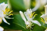 Macro world White Flower