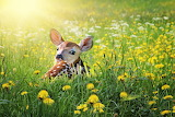 Cub-animal-deer-fawn-grass-flowers-nature