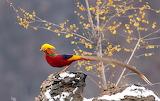 Bird, tail, pheasant, tree, rock, nature