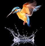 #Bird in Flight