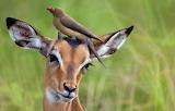 bird on cute deer