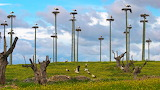 White Storks, Caceres