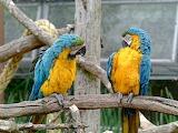 gossip in the aviary