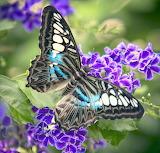 beauté en noir et bleu